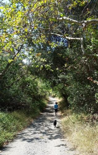 2014-06-14 Sullivan Canyon Trail
