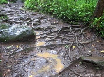 Waihe'e Ridge Trail - terrain