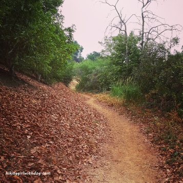 This part of trail reminded me of fall and it smelled like one too.
