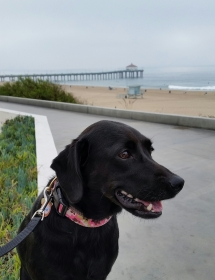 Beginning of our walk - Manhattan Beach pier in the background