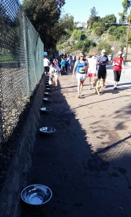 Water bowls for the canine race participants
