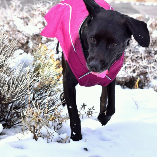 Once she got over the shock of seeing the snow for the first time, she was ready to play and eat the snow. She quickly learned though that eating snow makes her cold. Brrr