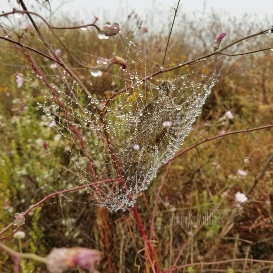 Misty Cobweb.jpg