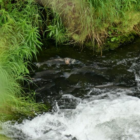 Russian_river
