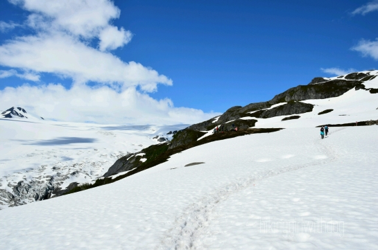 exit_glacier_trail_3