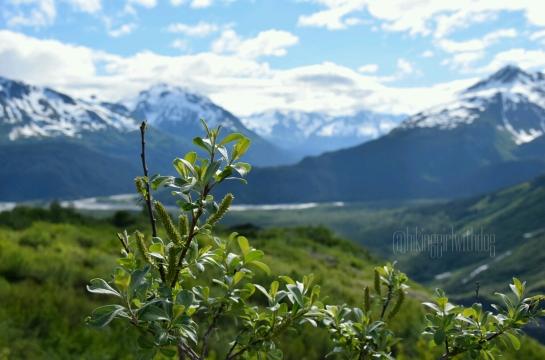exit_glacier_trail_2