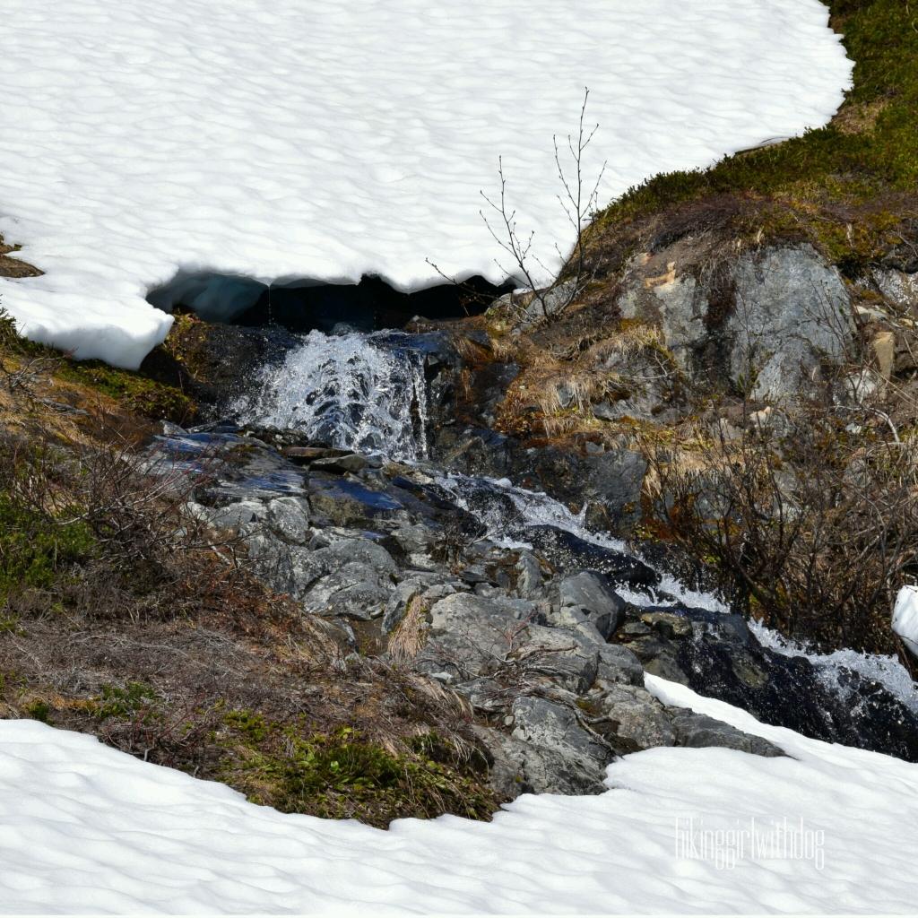 exit_glacier_trail_11