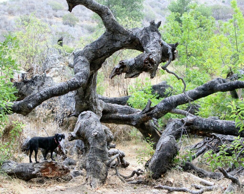 Beast vs. Tree