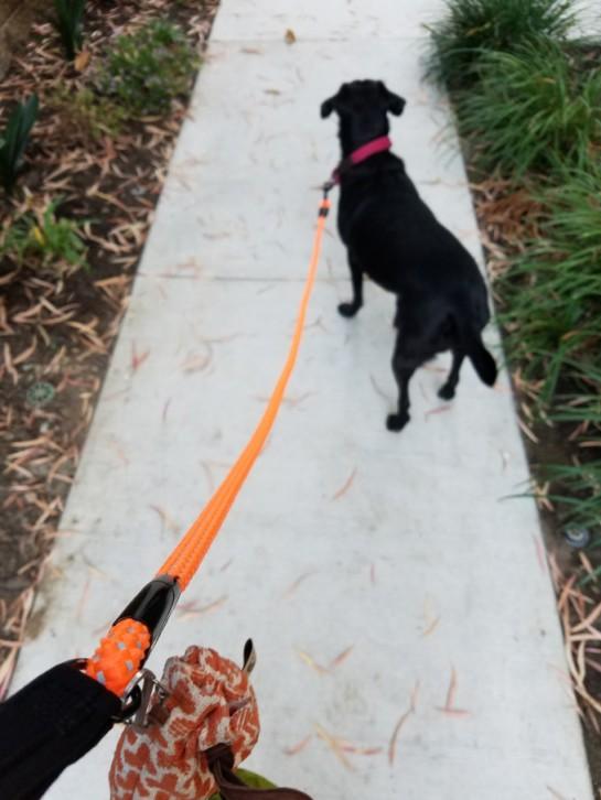 dazzle_rope_leash