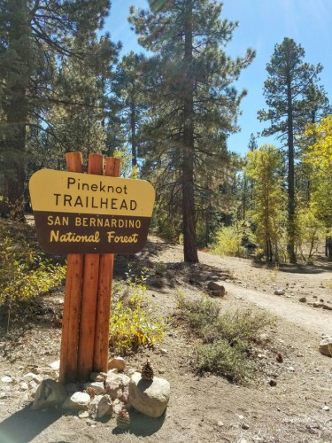 pine_knot_trail_1