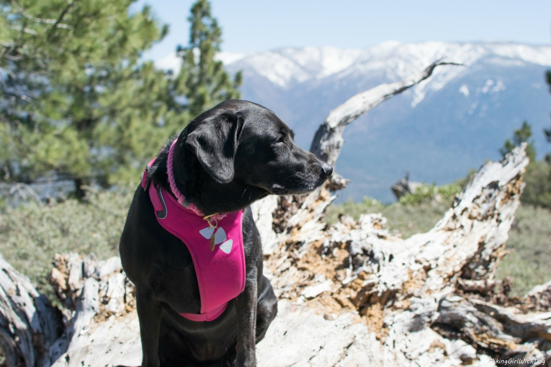 dog friendly hikes in big bear lake