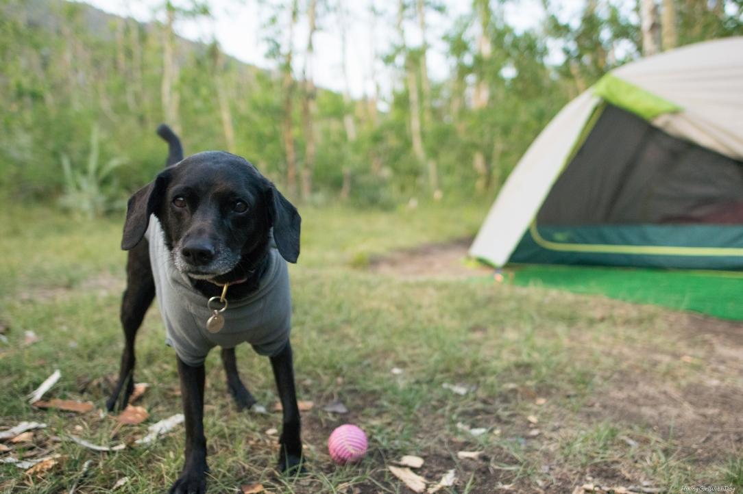 camping-31435604657.jpg