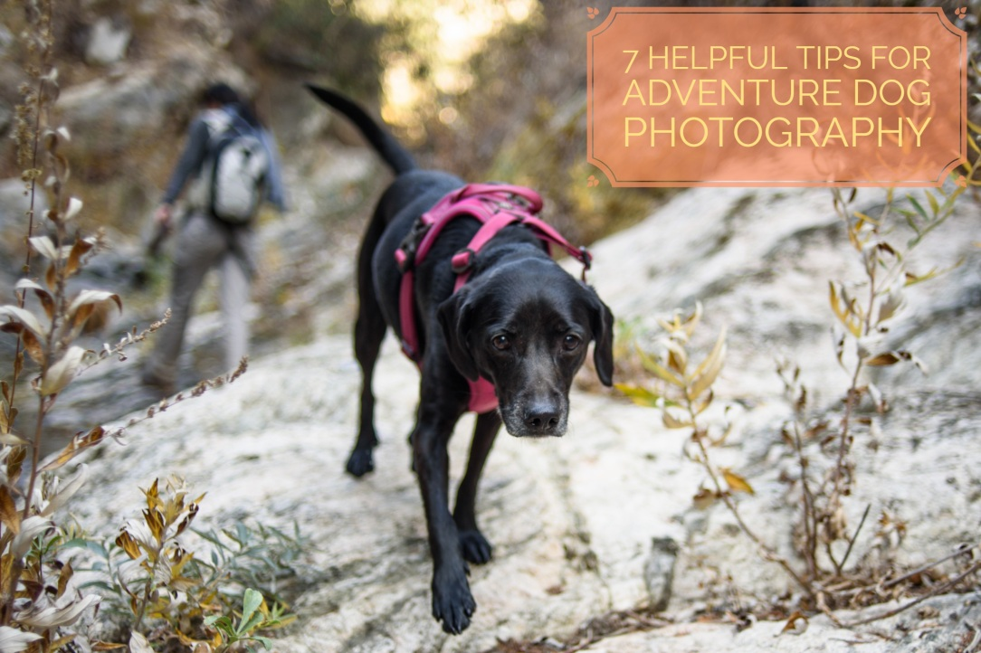 Helpful Hints For Hiking With A Dog
