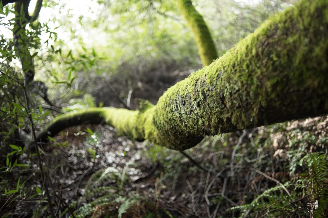 redwood-16