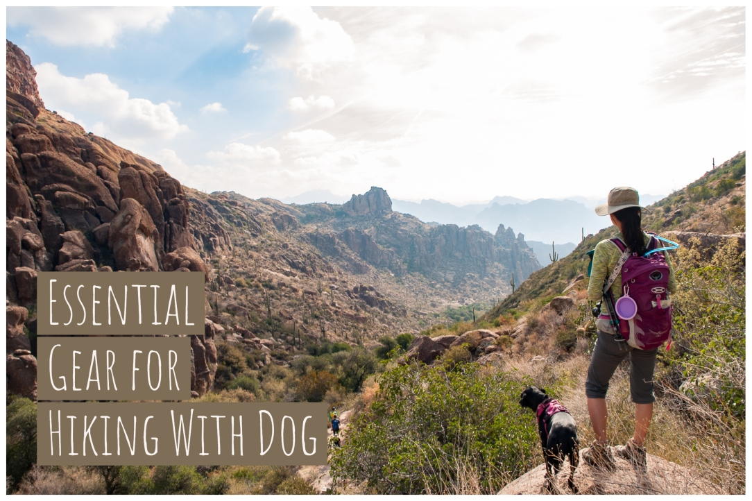Essential Gear for Hiking With Dog