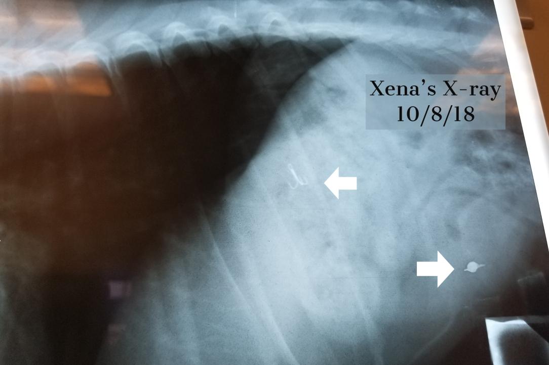 xena's x-ray 10_8_18