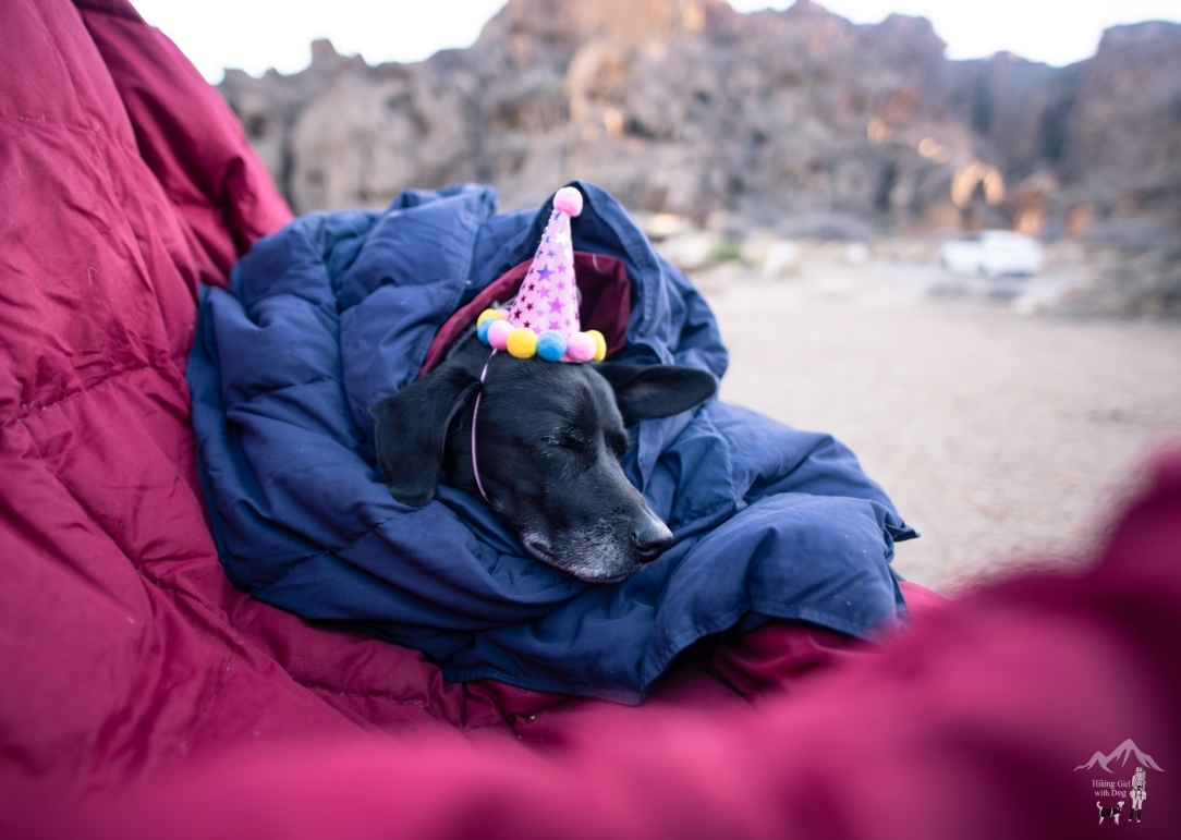 adventure dog photography