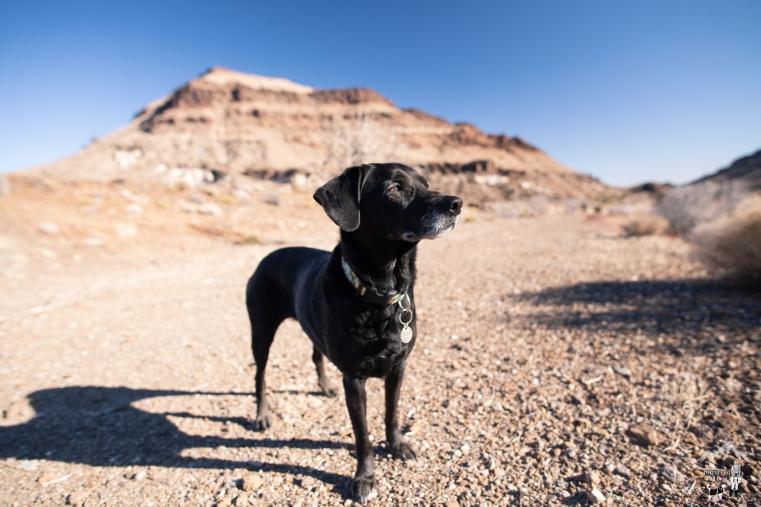 adventure dog photography