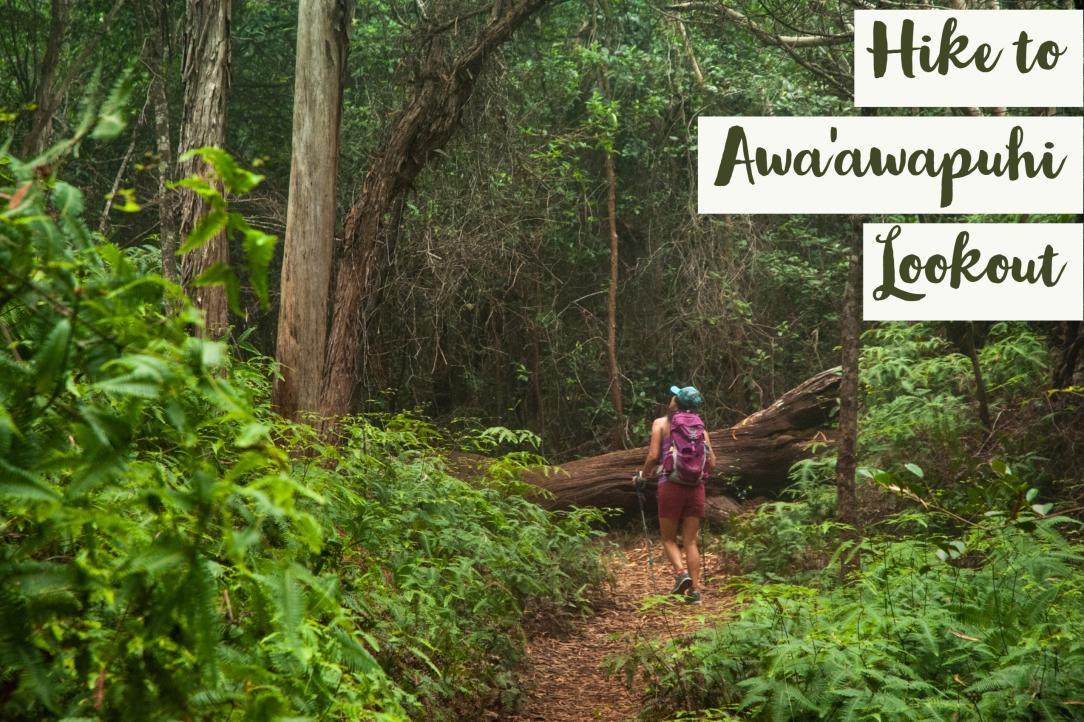 Awa'awapuhi Lookout Kauai