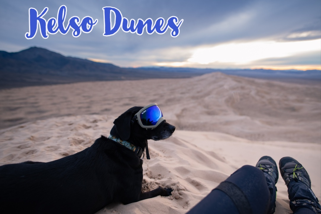 Kelso Dunes Dog-friendly