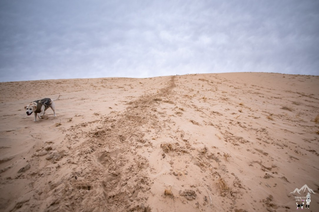 kelso_dunes-17.jpg