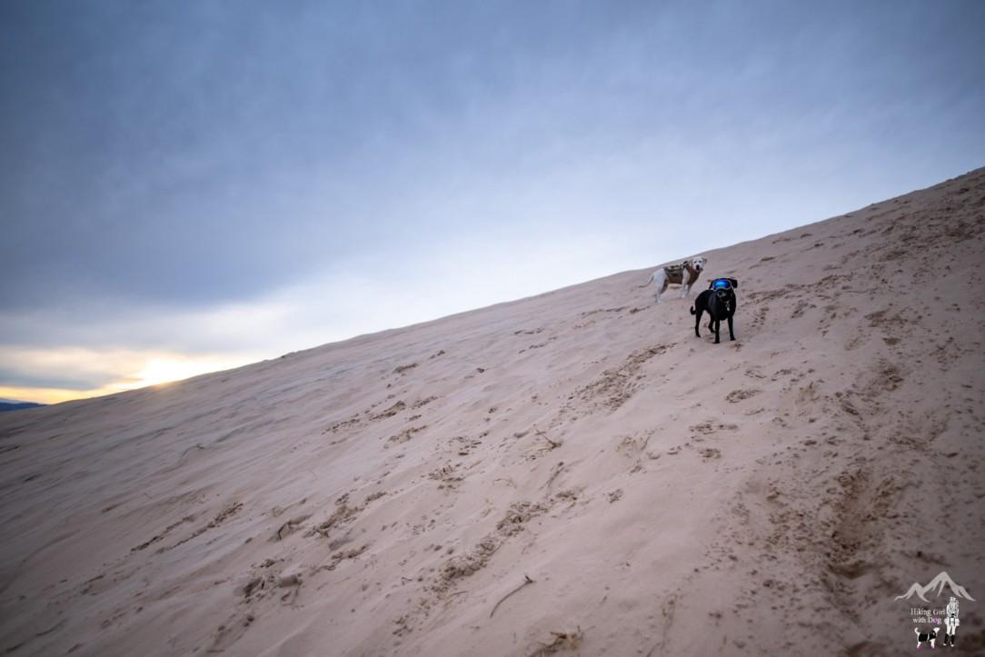 kelso_dunes-18.jpg