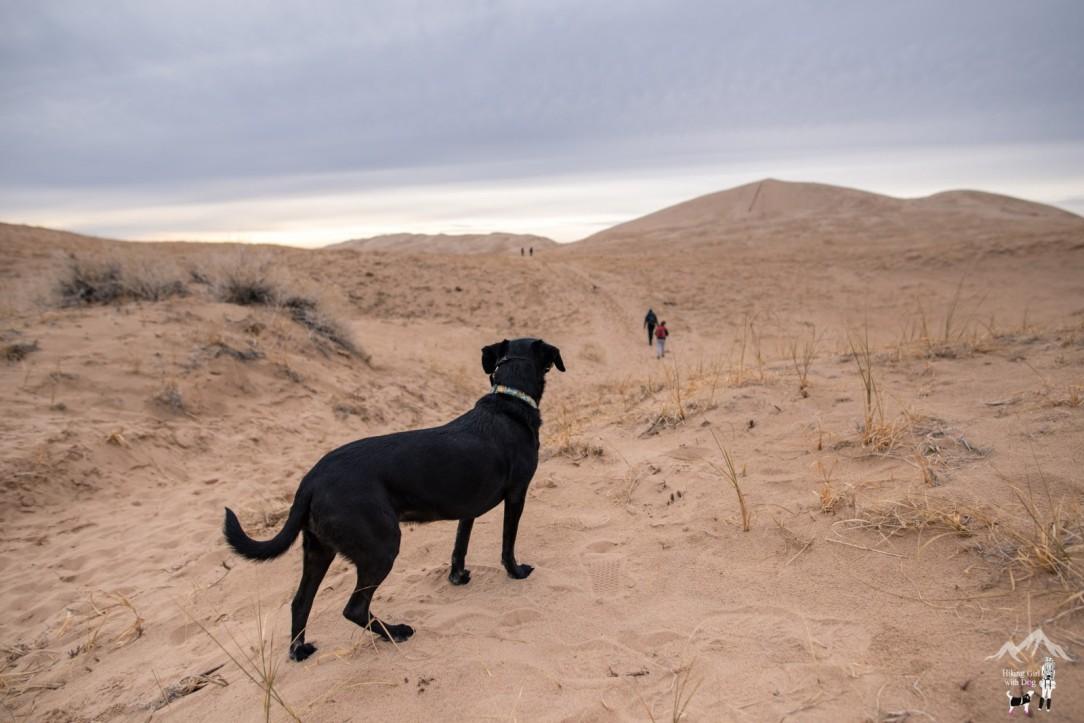 kelso_dunes-3.jpg