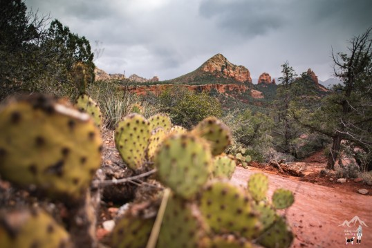 Soldier Pass Trail