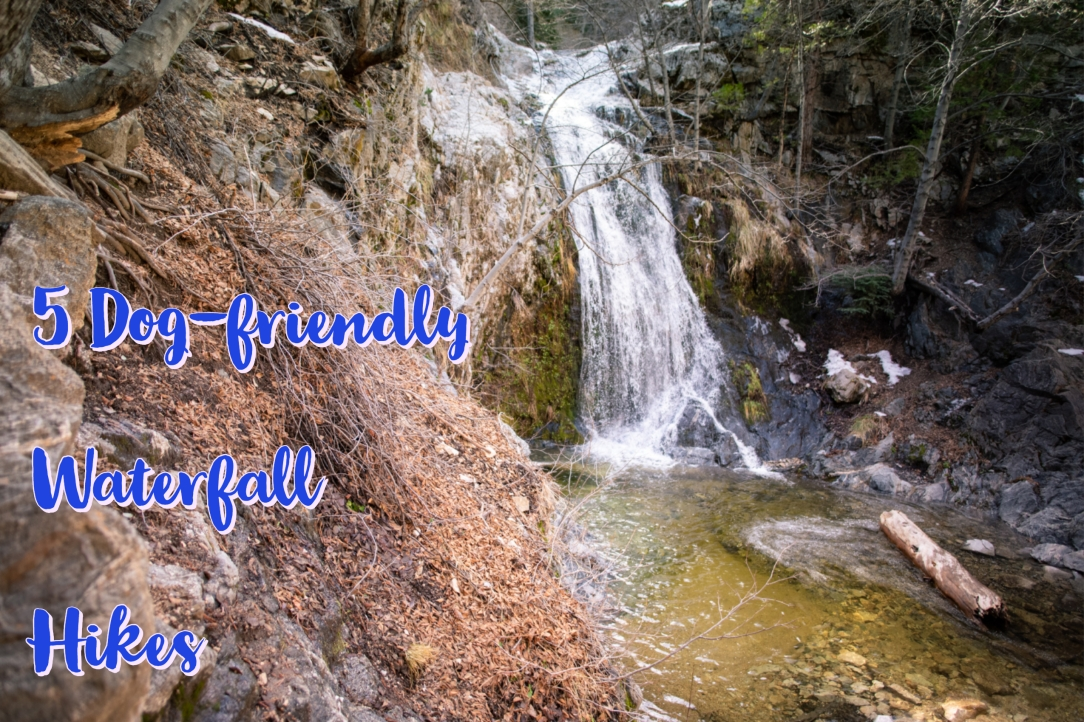 5 Dog-friendly Waterfall Hikes