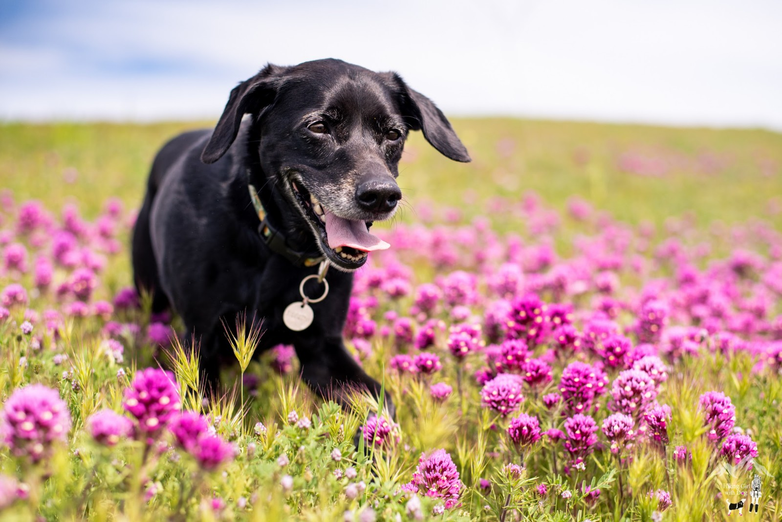 Outdoor Dog Photography
