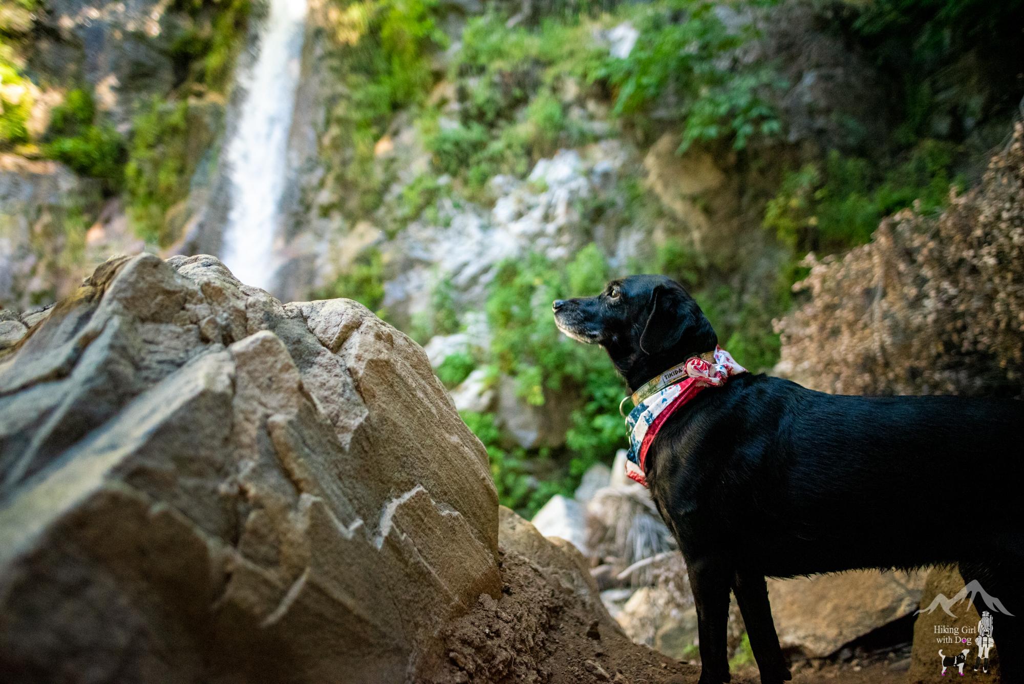 Adventure Dog