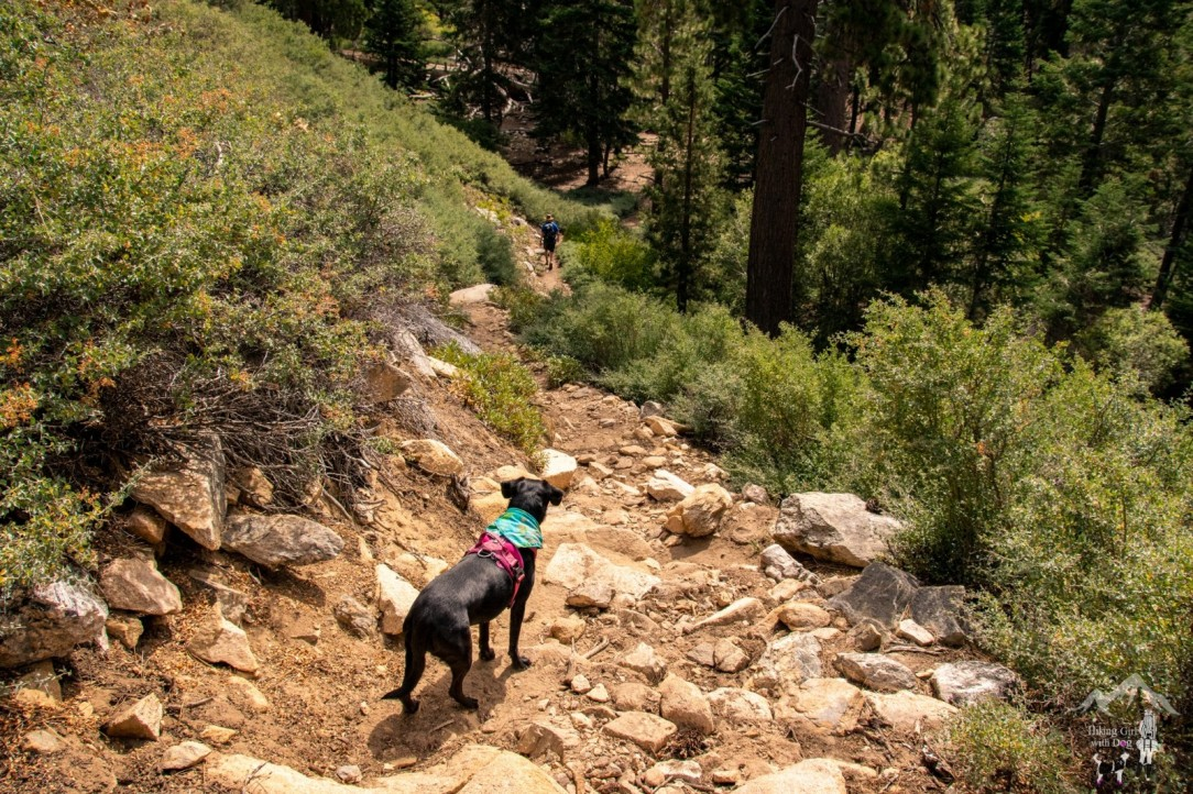 Vivian Creek Trail
