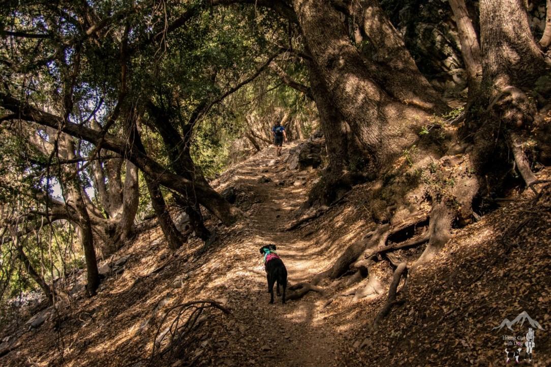 Vivivan Creek Trail