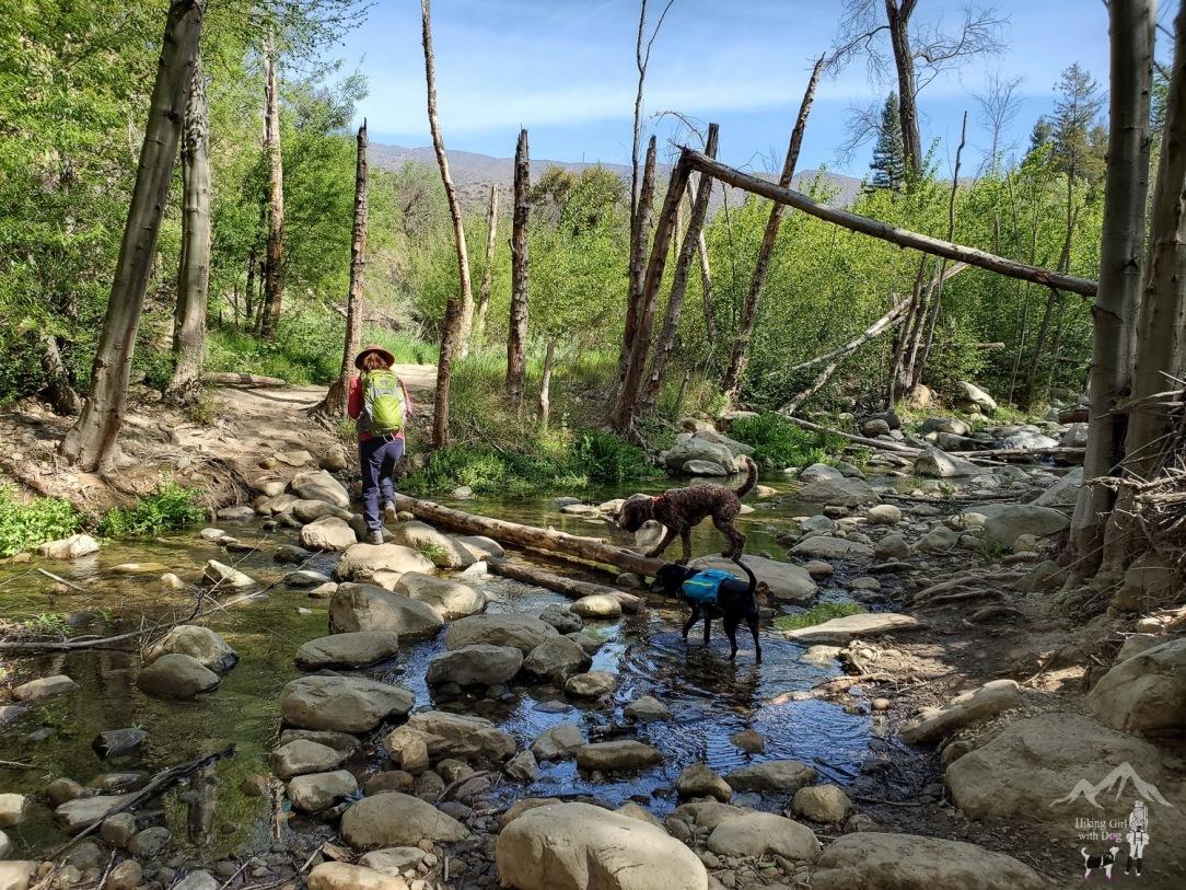 Hiking Girl with Dog